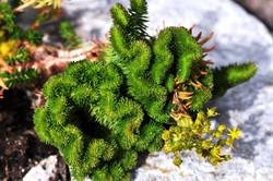 Fauna i flora (81)