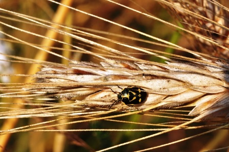 Fauna i flora (5)