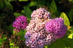 Fauna i flora (1)