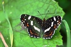 Fauna i flora (29)