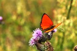 Fauna i flora (128)