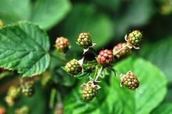 Fauna i flora (12)
