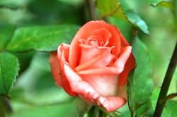 Fauna i flora (73)