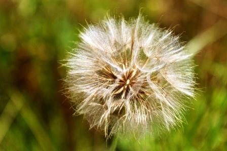 Fauna i flora (113)