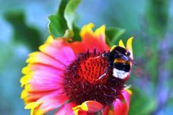 Fauna i flora (109)
