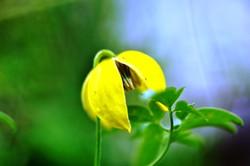 Fauna i flora (67)