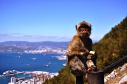 Gibraltar (97)