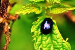Fauna i flora (55)