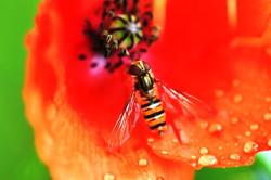 Fauna i flora (40)
