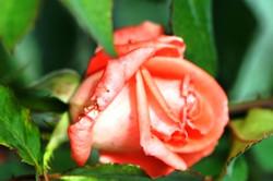 Fauna i flora (82)