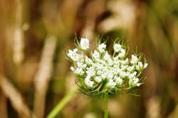 Fauna i flora (104)