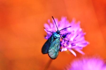Fauna i flora (13)