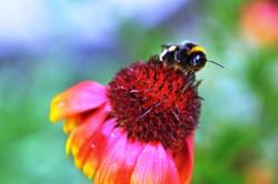 Fauna i flora (71)