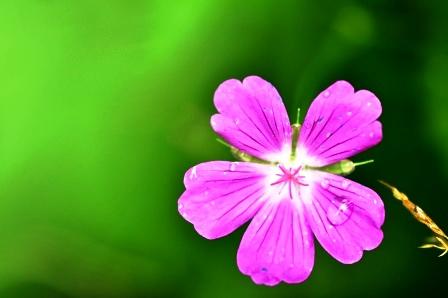 Fauna i flora (52)