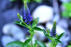 Fauna i flora (65)