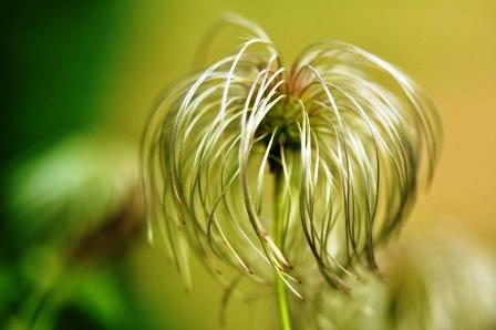 Fauna i flora (66)