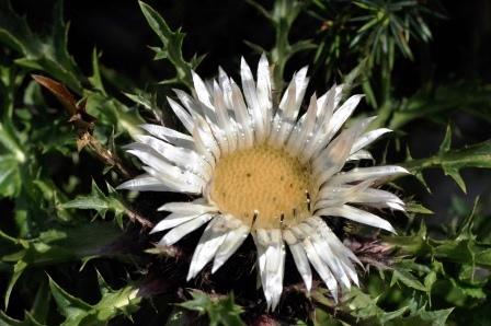 Fauna i flora (6)