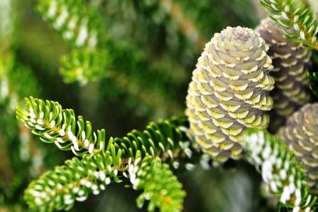 Fauna i flora (78)