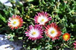 Fauna i flora (8)