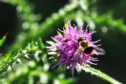 Fauna i flora (35)