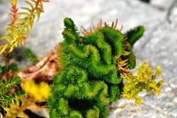 Fauna i flora (107)