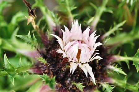 Fauna i flora (106)