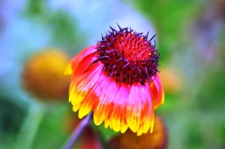 Fauna i flora (68)