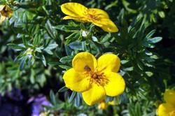 Fauna i flora (2)