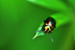 Fauna i flora (49)