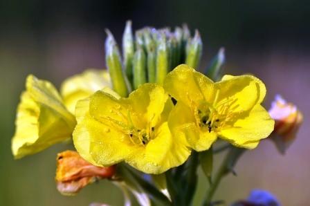 Fauna i flora (121)
