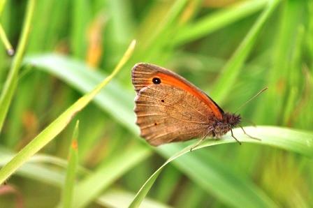 Fauna i flora (94)
