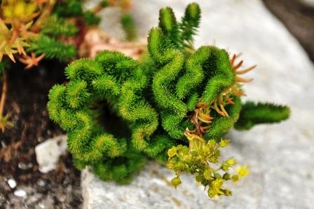 Fauna i flora (75)