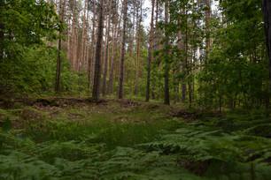 Rezerwat Dęby Seroczyńskie (201).JPG
