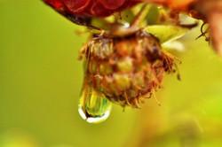Fauna i flora (24)