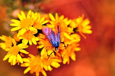 Fauna i flora (88)