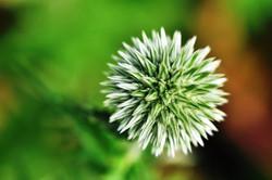 Fauna i flora (87)