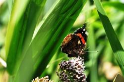Fauna i flora (39)