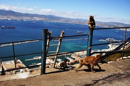 Gibraltar (93)