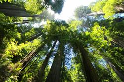 sequoia-274158