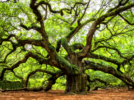 The Profound Meaning Behind The 37 Oaks' Name