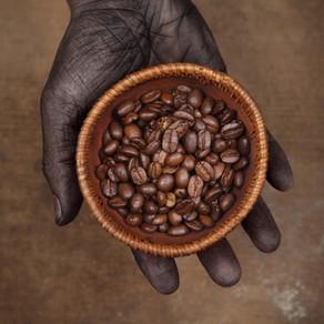 Kavos balas arba  Kaip kava tampa rūšine