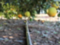 mac burge orange irrigation.jpg