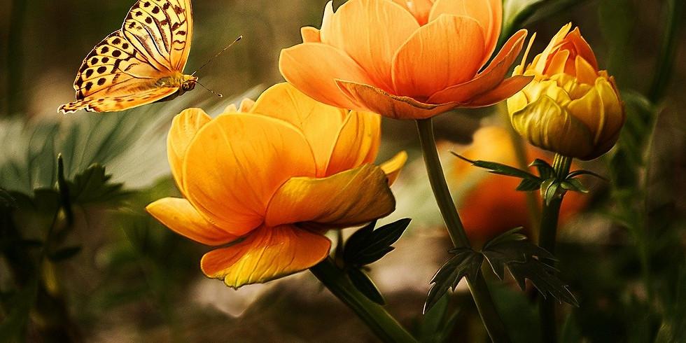 Pollinator Story Time