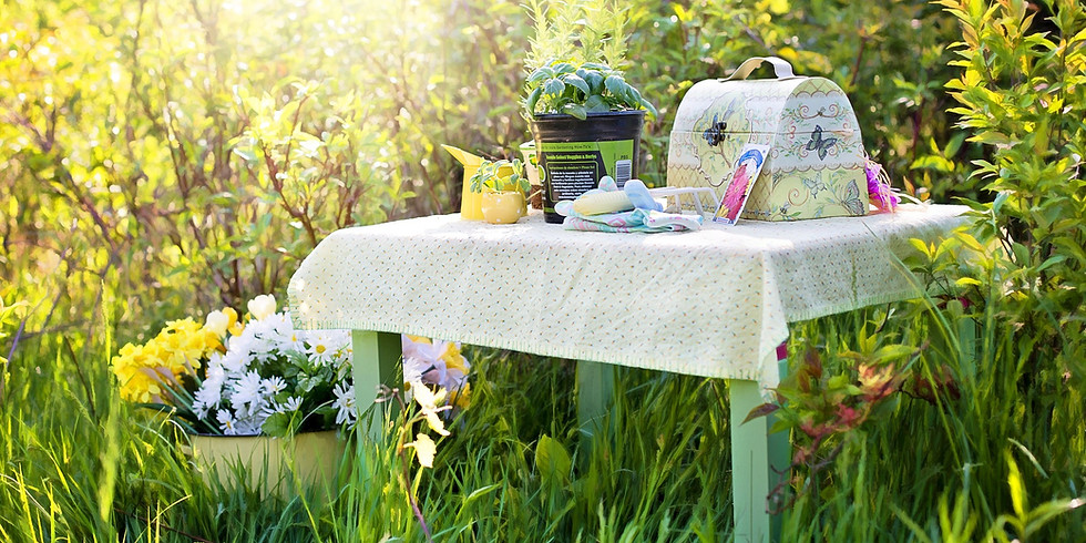 How To Grow an Herb Garden: Seed Starting