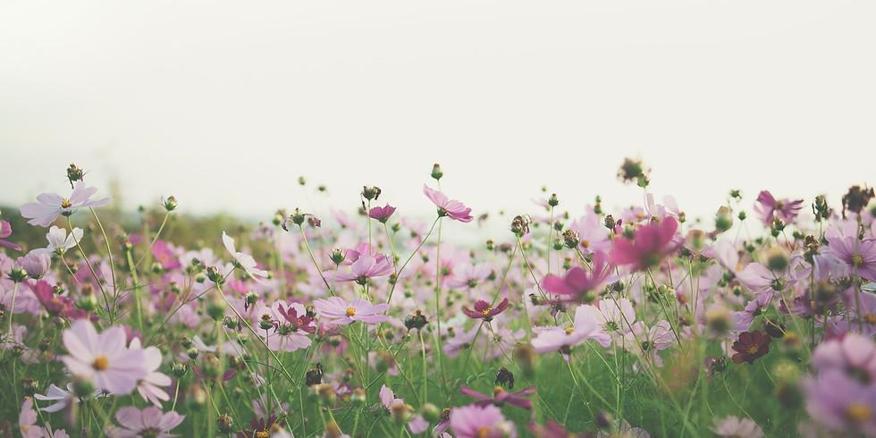 Herbal Self Care: Spring Awakening