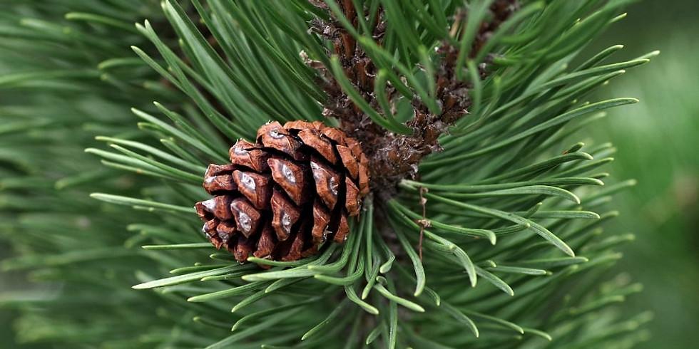 Herbs of Winter