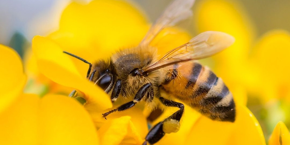 Pollinators: Flower Friendly Wildlife