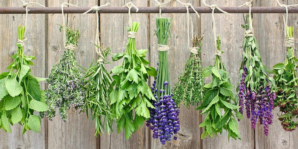 How to Start an Herb Garden at Home