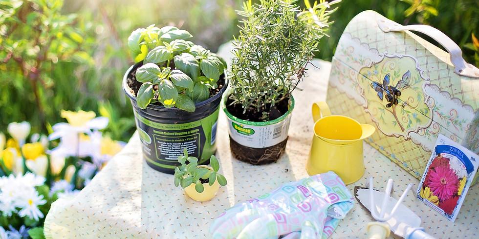 How To Grow an Herb Garden: Planning