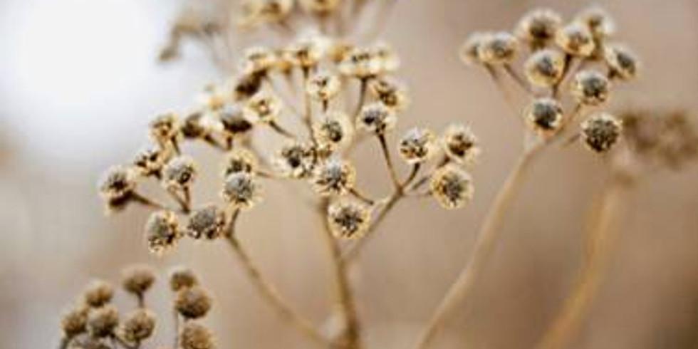 Seed Saving and Plant Propagation